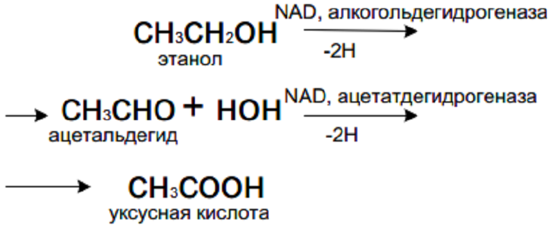 продукты распада алкоголя в организме человека.png